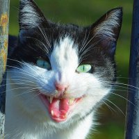 Кошечка :: Ольга (crim41evp)