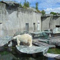 Белый медведь, зоопарк г. Штутгарт Германия :: Tamara