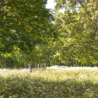 В старом парке :: Виталий