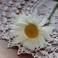 Цветок дня. :: Лариса Исаева