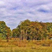Осенью в ботаническом саду :: Светлана