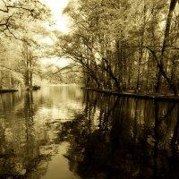 Гуляя по лесопарку :: Alexander Andronik