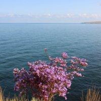 Кермек широколистый.Букетик из Крыма. :: Лариса Исаева