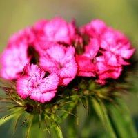 Божественный цветок :: Нэля Лысенко