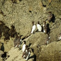 Птицы на скале :: Natalia Harries