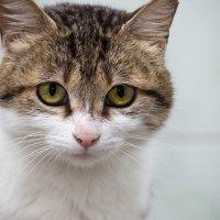 ЛАСКА, Центр помощи кошкам на Сахалине https://vk.com/laskasakhalin. Глаша :: Margarita Ласковая