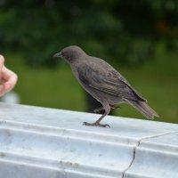 Птаха :: Ольга Соловьева