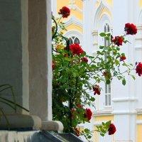 В любимом монастыре. г. Киржач. :: Любовь