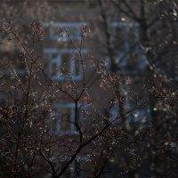 Дождь :: Лена Либрик