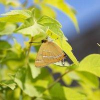 бабочка-красавица.... :: Наталья Меркулова