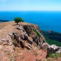 Одинокое дерево на Ильяс-Кая. :: Андрей Козлов