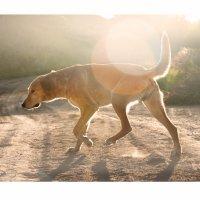 Un chien andalou :: Алексей