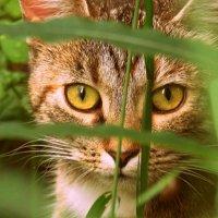 глаза кошки :: Валерия Яскович