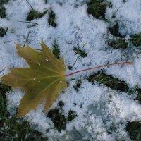 А снег упал раньше! :: Syntaxist (Светлана)