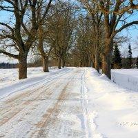 Зимняя дорога. :: Liudmila LLF