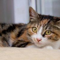 ЛАСКА, Центр помощи кошкам на Сахалине https://vk.com/laskasakhalin. Боня :: Margarita Ласковая