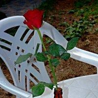 """""""В банке тёмного стекла из-под импортного пива роза красная цвела гордо и неторопливо""""... :: san05   Александр Савицкий"""