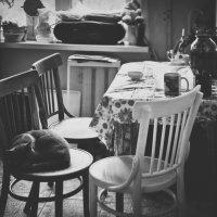 Одиночество-мой кот :: Paul B.
