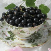 Черная смородина :: Mariya laimite