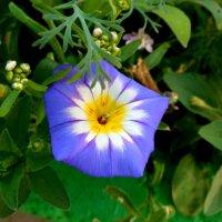 Цветок в цветке :: Надежда