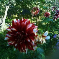 красивые цветы :: Владимир