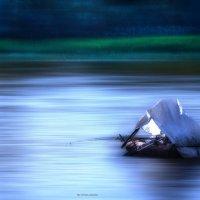 Ловись рыбка :: Игорь Чичиль