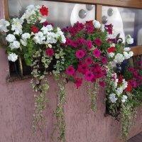 Цветы в городе :: Галина Бобкина