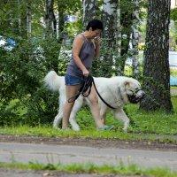 Маша и медведь. :: Анатолий. Chesnavik.