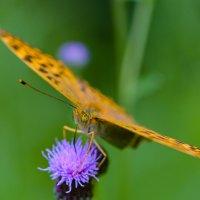 Мир насекомых :: Юрий Бичеров