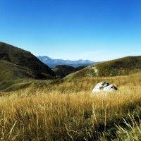 Травы... в горах :: Сергей Анатольевич