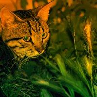 Сальво солнечный котёнок :: Роза Бара
