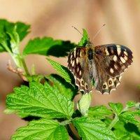 про бабочек 4 :: Александр Прокудин
