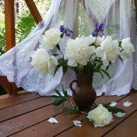 Белые пионы в кувшине :: Людмила