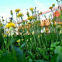 Летние цветы. :: Михаил Столяров