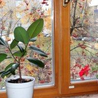 За окном. :: венера чуйкова
