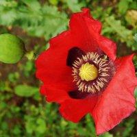 Очарование цветочное :: Валентина Пирогова