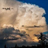 Storm coming... :: Andy Zav
