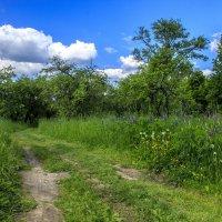 летний день в саду :: оксана