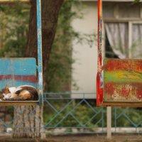 Очень одинокий кот :: Николай Агапитов