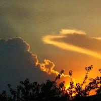 Последние лучи заходящего солнца. :: barsuk lesnoi
