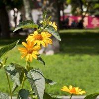 Городские цветы :: Ольга Винницкая (Olenka)
