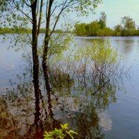 паводок 2018  2 :: Александр Прокудин