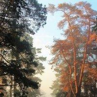 В росистой дымке первые лучи... :: Лесо-Вед (Баранов)