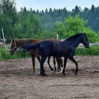 Пара лошадей, а ног многовато. :: Татьяна Помогалова