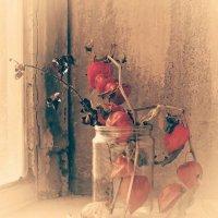 Физалис на старом окне :: Ольга Винницкая (Olenka)