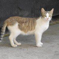 Кошки соседнего двора :: Маргарита Батырева