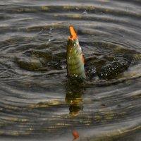 Рыбка... :: Дмитрий Петренко