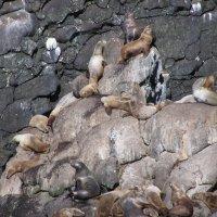 Аляска 2004 год :: Светлана Ященко