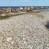 Море, солнце, камешки... :: veera (veerra)