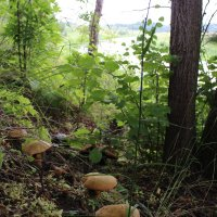 грибы на берегу реки Нерль :: Геннадий Тарасов